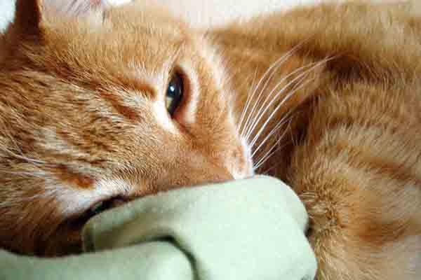 gato terapéutico