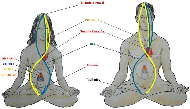ejercicios de transmutación para solteros gnosis
