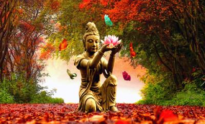 BUDDHO ENERSENSE: SANACIÓN INTEGRAL