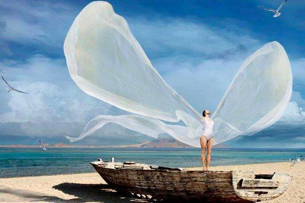 la paloma extiende sus alas