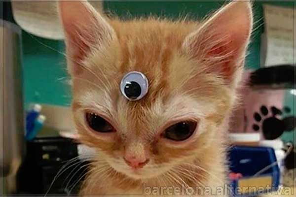 Stevie, el gato vidente